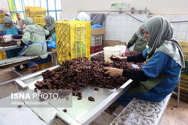 صدور 24 موافقت اصولی و جواز تاسیس طرح های کشاورزی در خوزستان
