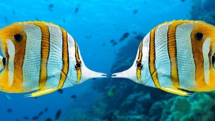 نظرتان درمورد یک ولنتاین دریایی چیست؟
