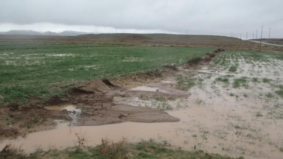 خبرنگاران 216 میلیارد ریال غرامت به کشاورزان خراسان جنوبی پرداخت شد