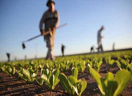 فعالیت های کشاورزی تعطیل بردار نیست