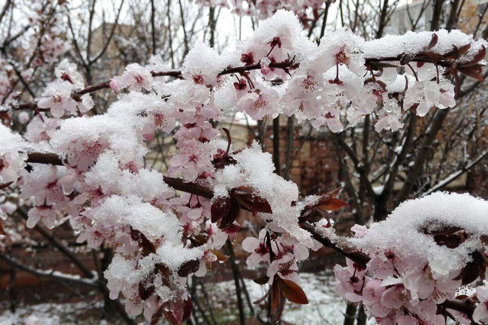 خبرنگاران خسارت 220 میلیارد تومانی سرما به کشاورزان آذربایجان شرقی