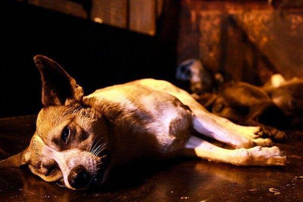 همدان ، واکنش ها به سگ کشی در شهرداری بهار