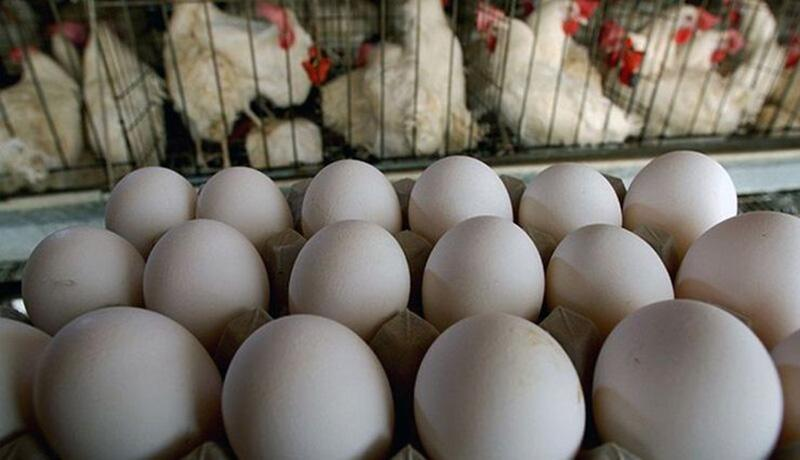 قیمت مرغ و تخم مرغ در بازار چقدر شد؟