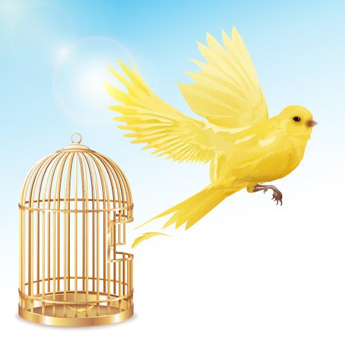 داستان ضرب المثل مرغ از قفس پرید