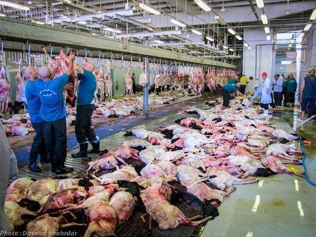 قیمت مصوب گوشت قرمز در بندرعباس اعلام شد