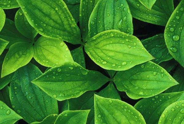 محافظت از گیاهان با کمک نانوذرات به دست آمده از آن ها ممکن شد