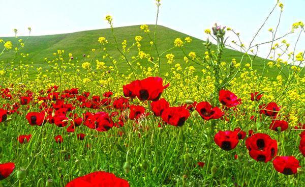 سفر به دشت مغان اردبیل؛ سرزمین تاریخ و طبیعت