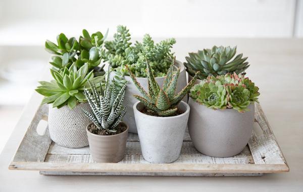 7 فایده شگفت انگیز گیاهان آپارتمانی بر اساس یافته های علمی