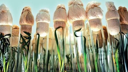 فناوری کشت بافت گیاهی گسترش می یابد تا فراوری محصولات عاری از بیماری بیشتر گردد
