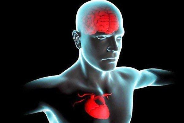 قلب سالم تر موجب عملکرد بهتر مغز می گردد